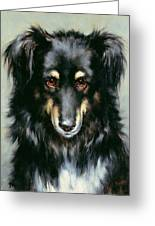 A Black And Tan Collie Greeting Card by Robert Morley