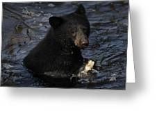 A Black Bear Feeds On Salmon In Anan Greeting Card by Melissa Farlow