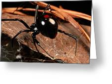 A Black Widow Spider Latrodectus Greeting Card by George Grall