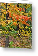 A Blustery Autumn Day Greeting Card by Frozen in Time Fine Art Photography