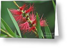 A Brush with Beauty Greeting Card by Joanne Kocwin