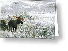 A Bull Moose On A Snow Covered Hillside Greeting Card by Rich Reid