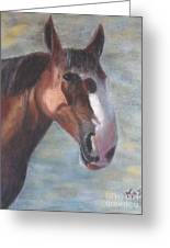 A California Clydesdale Greeting Card by Karen Sanabria