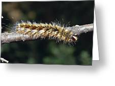 A Caterpillar In Defensive Posture Greeting Card by Jason Edwards