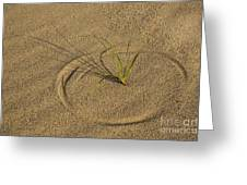A Compass In The Sand Greeting Card by Susan Candelario