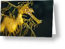 A Diminutive Leafy Sea Dragon Greeting Card by Jason Edwards