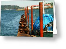 A Dock Of Sea Lions Greeting Card by Jeff  Swan