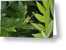 A Dragonfly Resting On A Leaf Greeting Card by George Grall