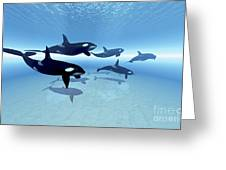 A Family Of Killer Whales Search Greeting Card by Corey Ford
