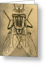 A Female House Fly Resting On Glass Greeting Card by N.A. Cobb