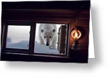 A Female Polar Bear Peering Greeting Card by Paul Nicklen