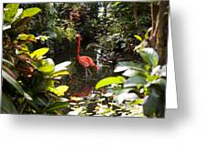 A Flamingo Wades In Shallow Water Greeting Card by Taylor S. Kennedy