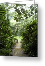 A Flooded Path At Manoa Falls Greeting Card by Stacy Gold