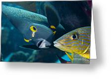A French Angelfish Swims Up Close Greeting Card by Terry Moore