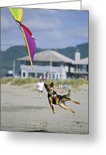 A German Shepherd Leaps For A Kite Greeting Card by Phil Schermeister