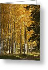 A Golden Trail Greeting Card by Phyllis Denton