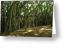 A Grove Of Banyan Trees Send Airborn Greeting Card by Paul Damien