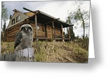 A Hawk Owl Sits On A Stump Near A Log Greeting Card by Michael S. Quinton
