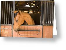 A Horse In Its Stable Greeting Card by Stacy Gold