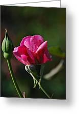 A Knockout Rose Greeting Card by Skip Willits