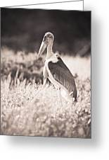 A Large Bird Stands In The Grass Greeting Card by David DuChemin