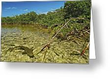 A Lemon Shark Pup Swims Among Mangrove Greeting Card by Brian J. Skerry