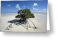 A Lone Mangrove Tree On A Sand Spit Greeting Card by Scott S. Warren