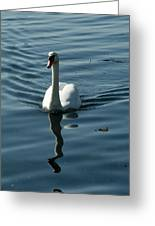 A Lone Swan Swims Through The Water Greeting Card by Todd Gipstein