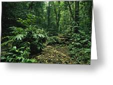 A Lush Woodland View In Papua New Greeting Card by Klaus Nigge