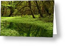 A Meadow Inside The Quinault Valley Greeting Card by Darlyne A. Murawski