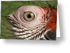 A Military Macaw Ara Ambiguus Greeting Card by Joel Sartore