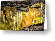 A Moment Of Reflection Greeting Card by Mary Amerman