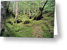 A Mossy Woodland View On Queen Greeting Card by Bill Curtsinger