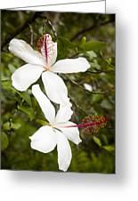 A Native Hawaiian Hibiscus Arnottianus Greeting Card by Taylor S. Kennedy