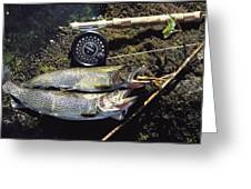 A Pair Of Cutthroat Trout, Salmo Greeting Card by Bill Curtsinger
