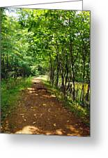 A Path Around The Pond Greeting Card by Robert Margetts