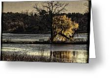 A Place To Think Greeting Card by Thomas Young