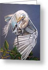 A Preening Great Egret Greeting Card by Teresa Smith