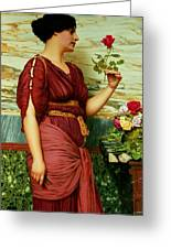 A Red Rose   Greeting Card by John William Godward