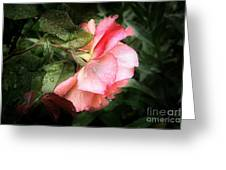 A Rose Is A Rose Greeting Card by Viaina