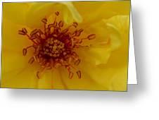 A Roses Heart Greeting Card by Eva Thomas