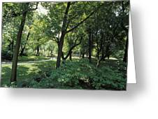 A Scenic And Shady Central Park Garden Greeting Card by Jason Edwards