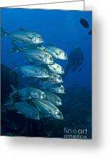 A School Of Bigeye Trevally, Papua New Greeting Card by Steve Jones