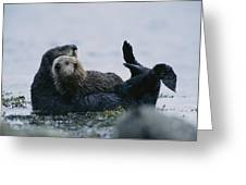 A Sea Otter Cradling Her Pup In A Kelp Greeting Card by Joel Sartore