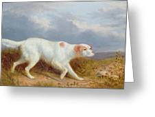 A Setter On The Moor Greeting Card by Philip Reinagle