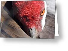A Shy Sandhill Crane Greeting Card by Travel Designed