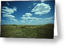 A Small Herd Of Bison Bison Bison Graze Greeting Card by James P. Blair