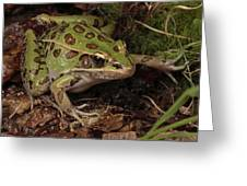A Southern Leopard Frog Pauses In Leaf Greeting Card by George Grall