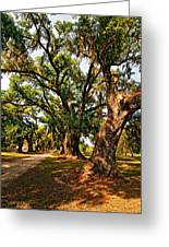 A Southern Stroll Greeting Card by Steve Harrington