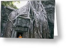 A Strangler Figs Gnarled Roots Creep Greeting Card by Paul Chesley